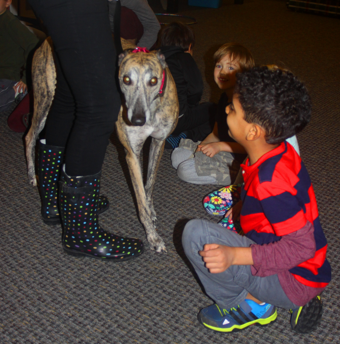 Visit with Max the rescue greyhound email.jpg