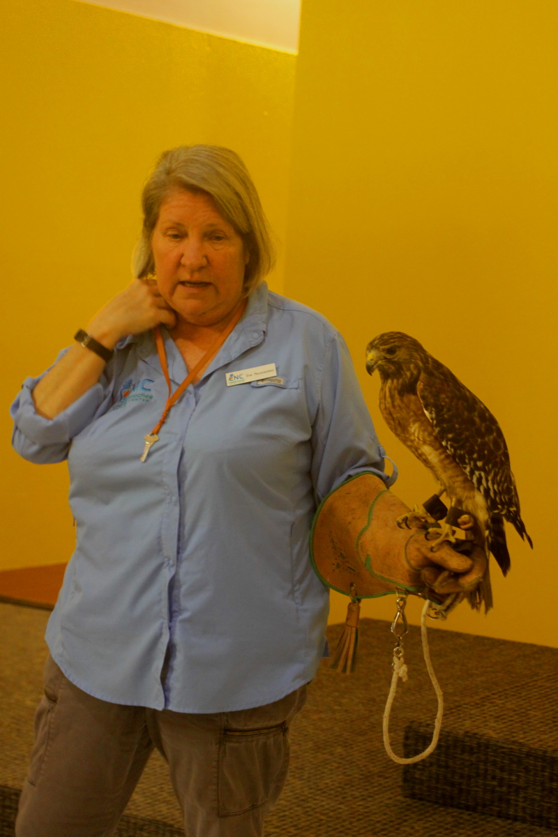Ki Eve and the red-shouldered hawk email.jpg