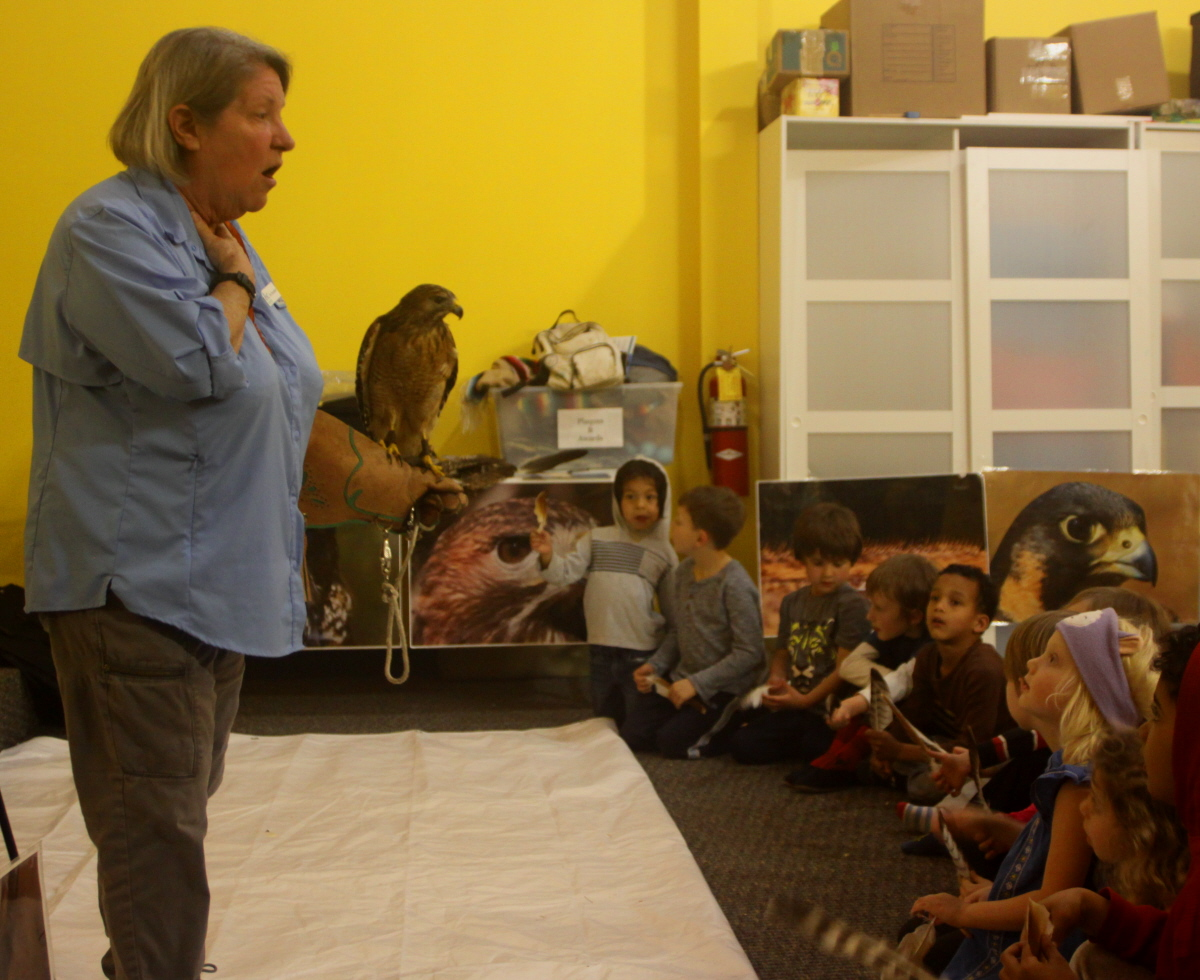 Ki Eve shares a red-tailed hawk with the kindergarten email.jpg