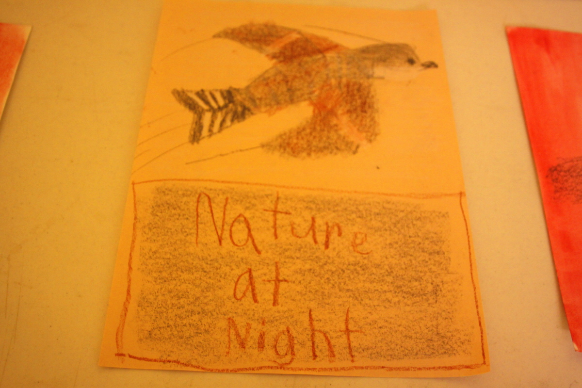Nature at Night nighthawk email.jpg