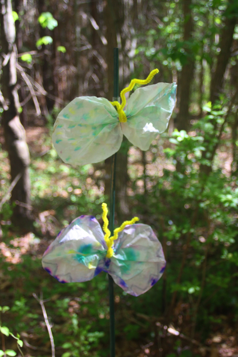 Tissue butterflies email.jpg