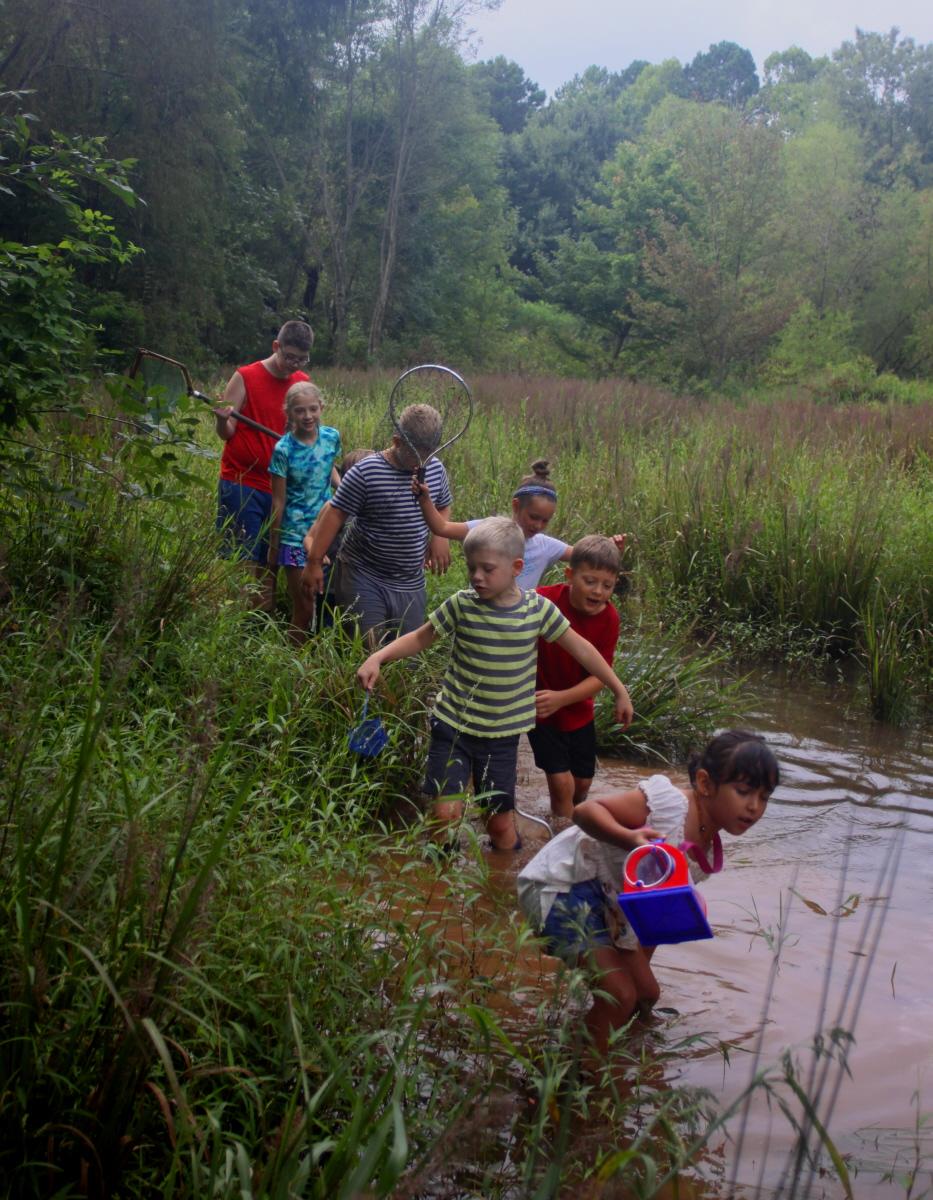 Wetland walk email.jpg
