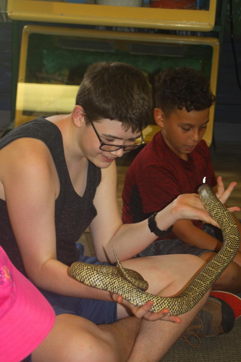 Befriending a king snake email.jpg