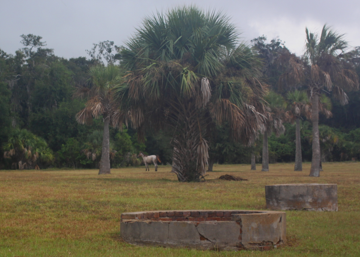 Wild horse and palms on Cumberland email.jpg