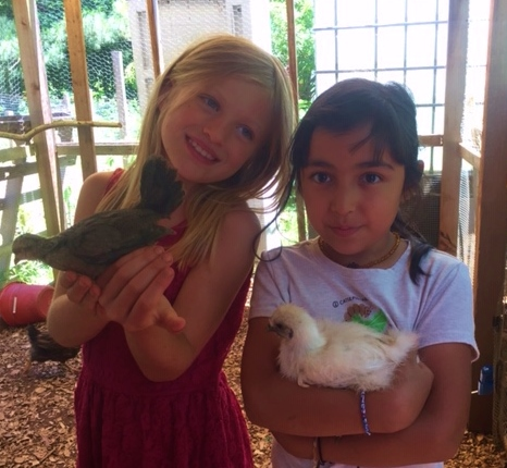Cuddling chicks.jpg