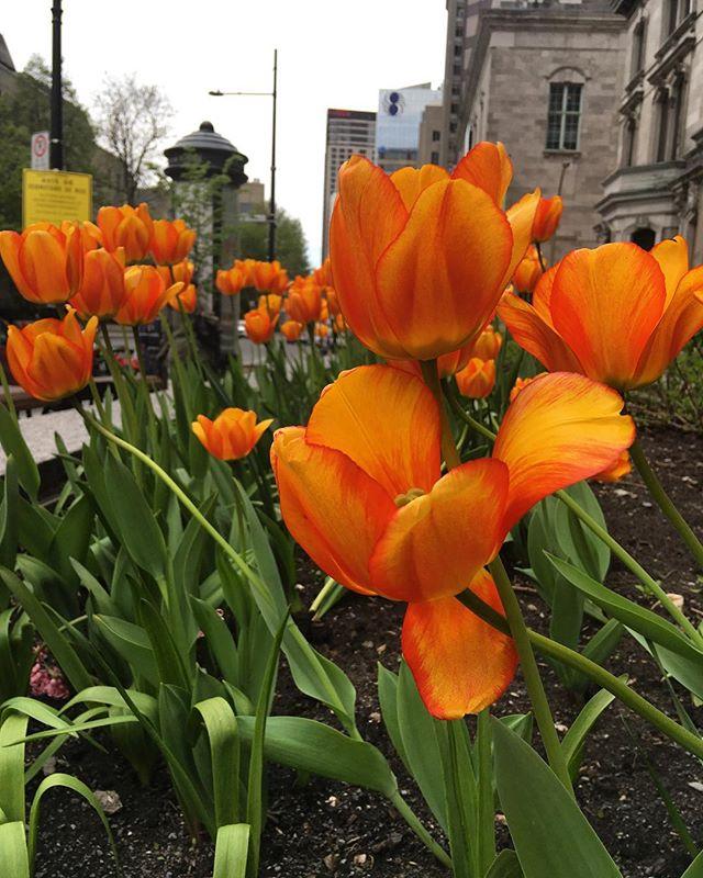 #Montreal spring forever pls 🙌🏻