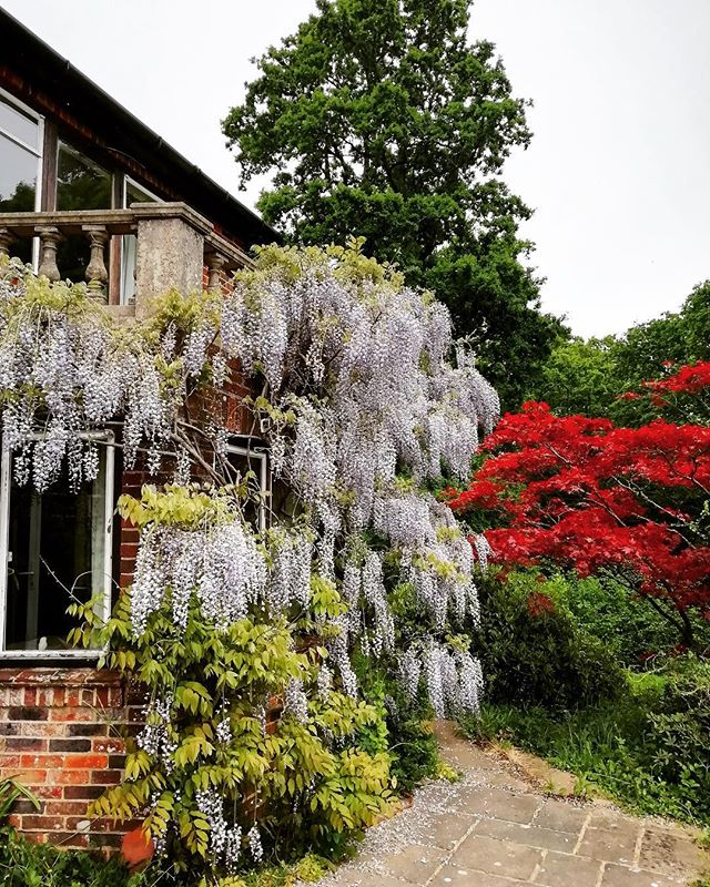 I love England. I can't wait for a backyard of my own one day so I can cover it in magical wisteria and pretend I'm in England 🙌🏻