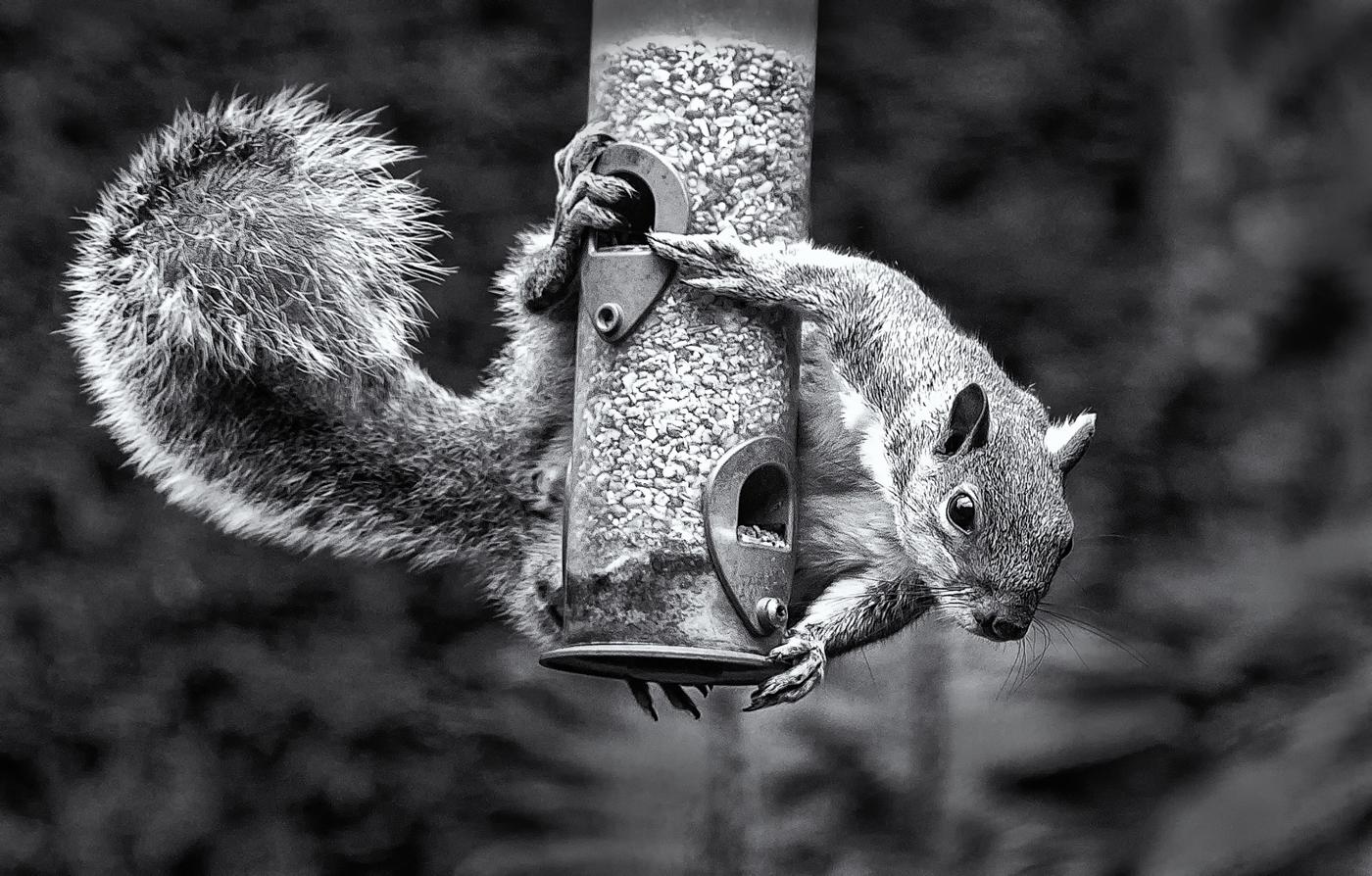 SQUIRREL by Eric Ruthenberg.jpg