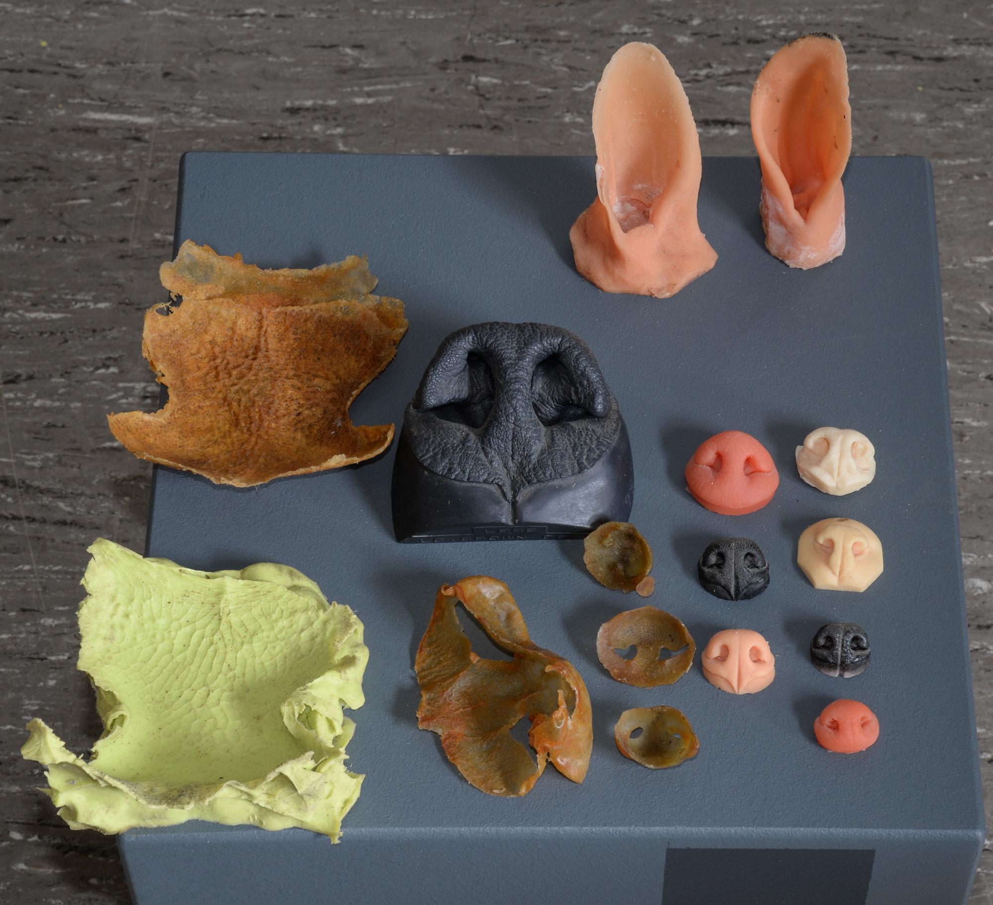 Nasenabgüsse und Nasenstempel -
