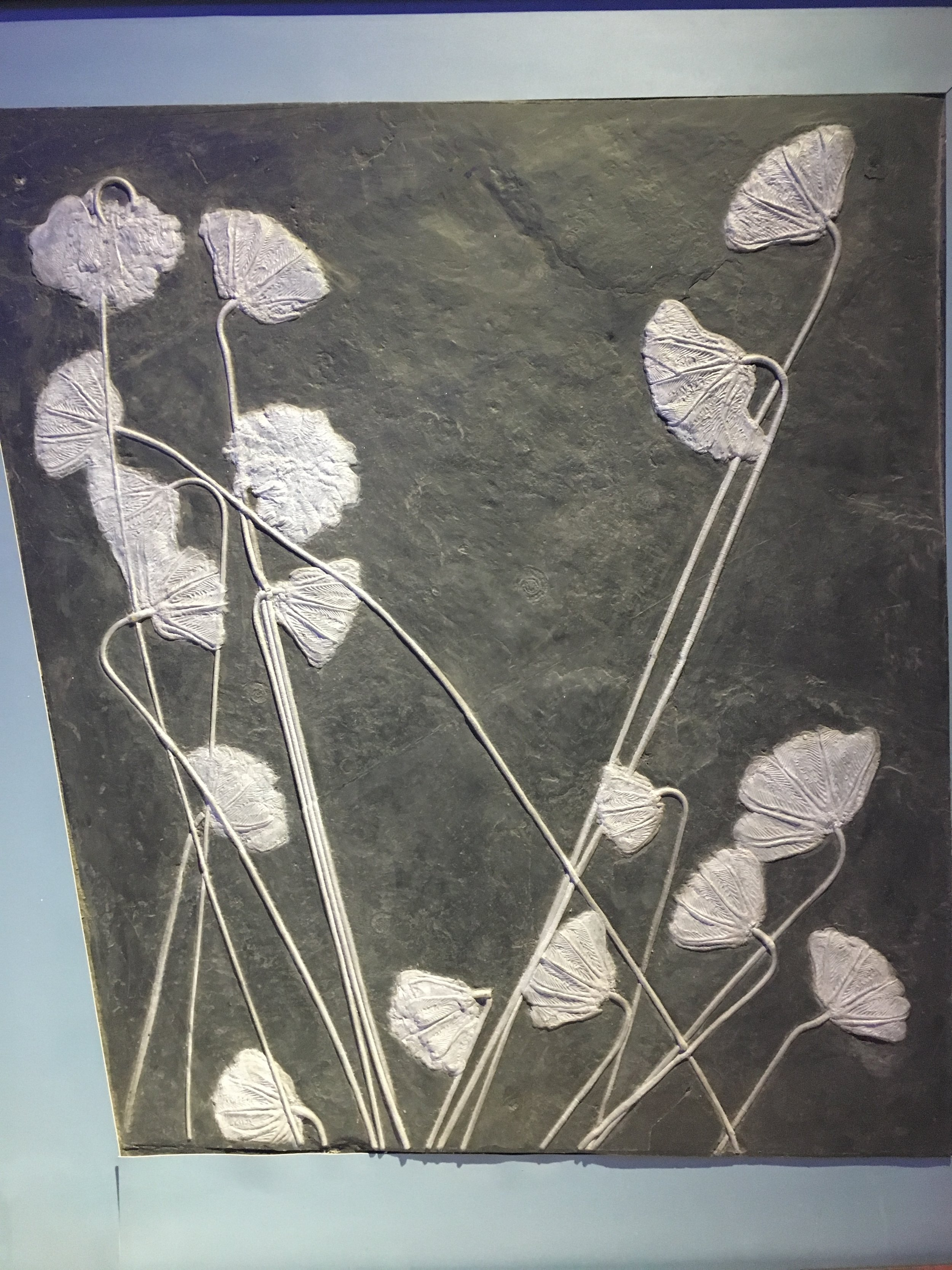 fossiled flowers crinoid.jpg