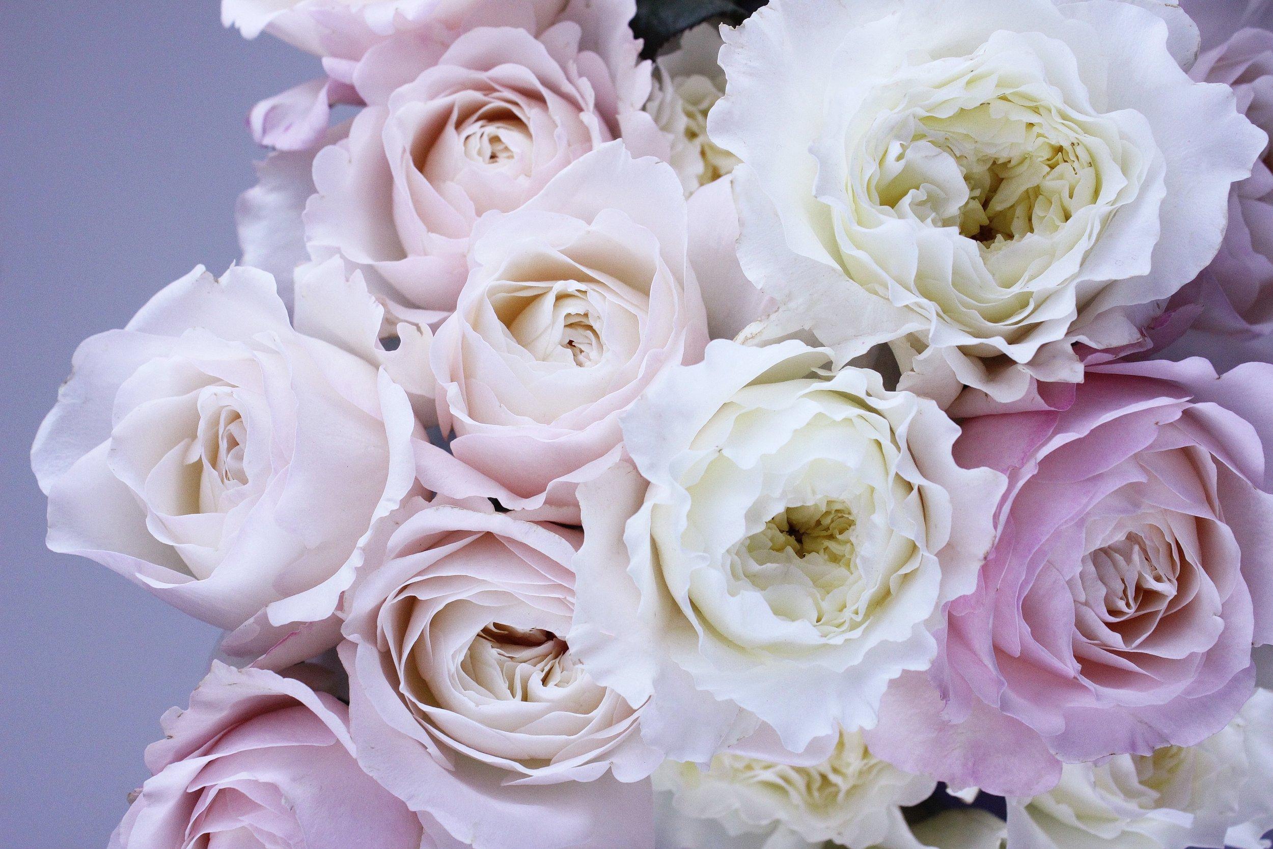 bloom-blooming-blossom-122737.jpg