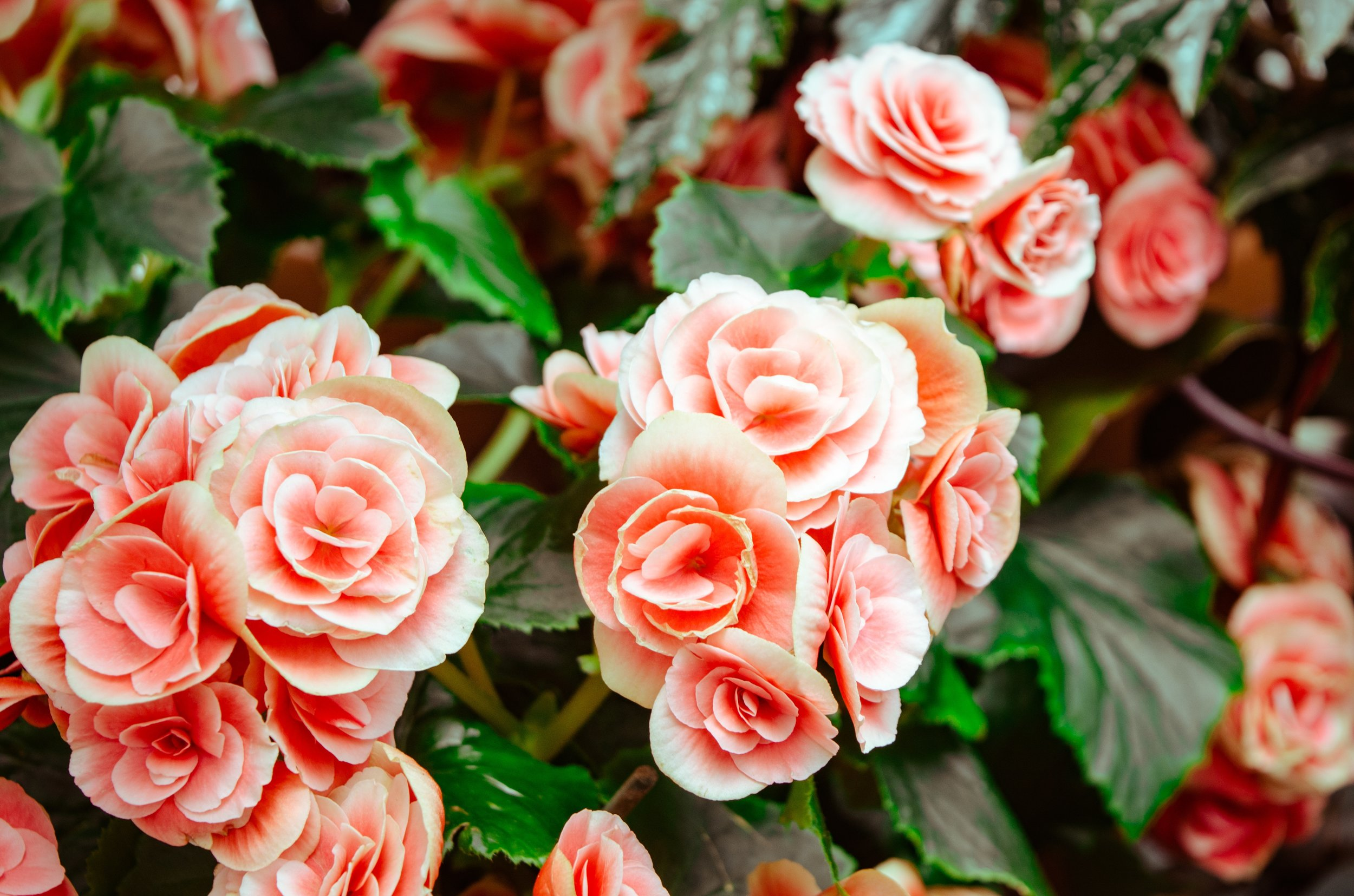 beautiful-bloom-blooming-613001.jpg