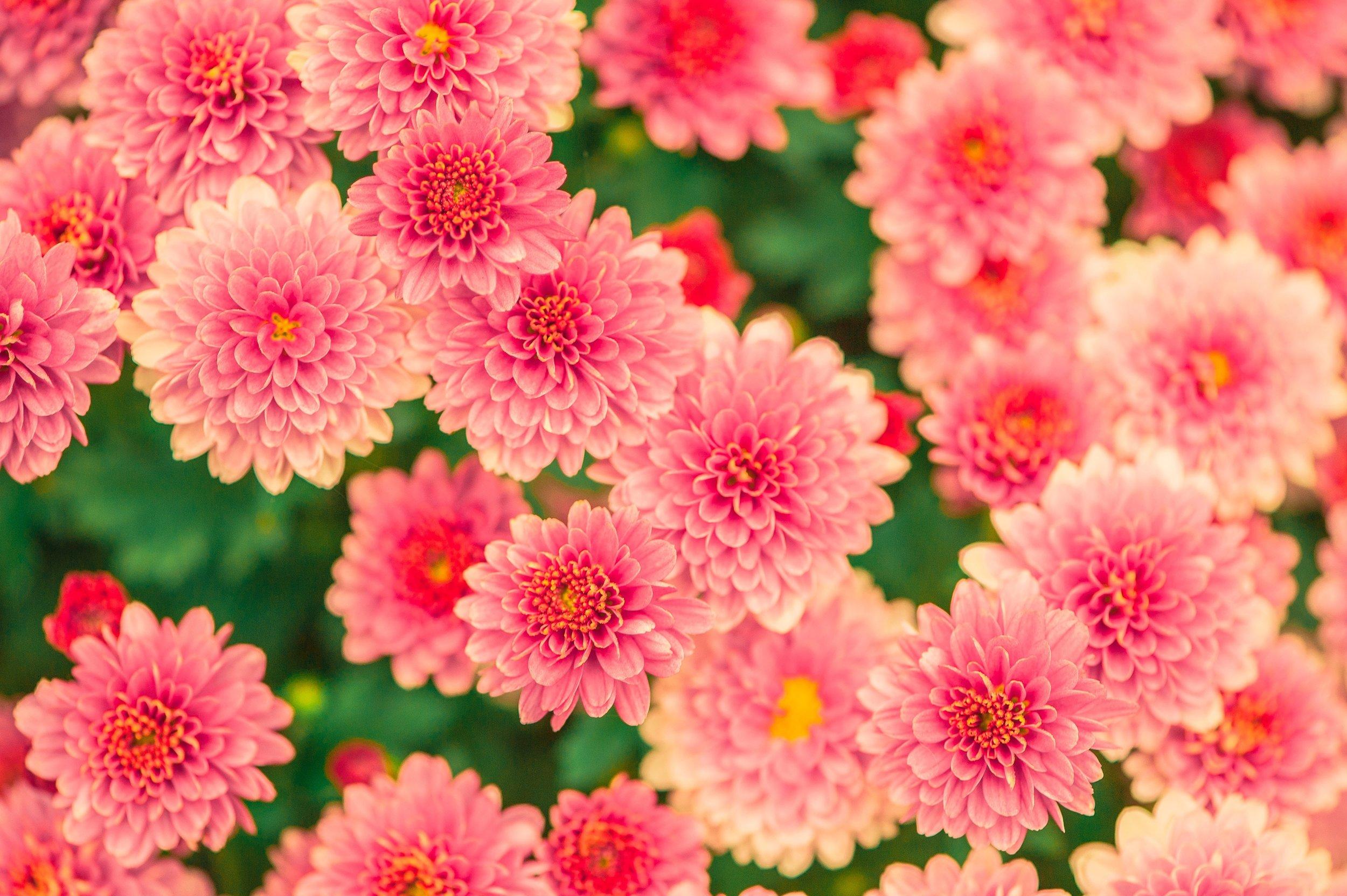beautiful-bloom-blossom-47360.jpg