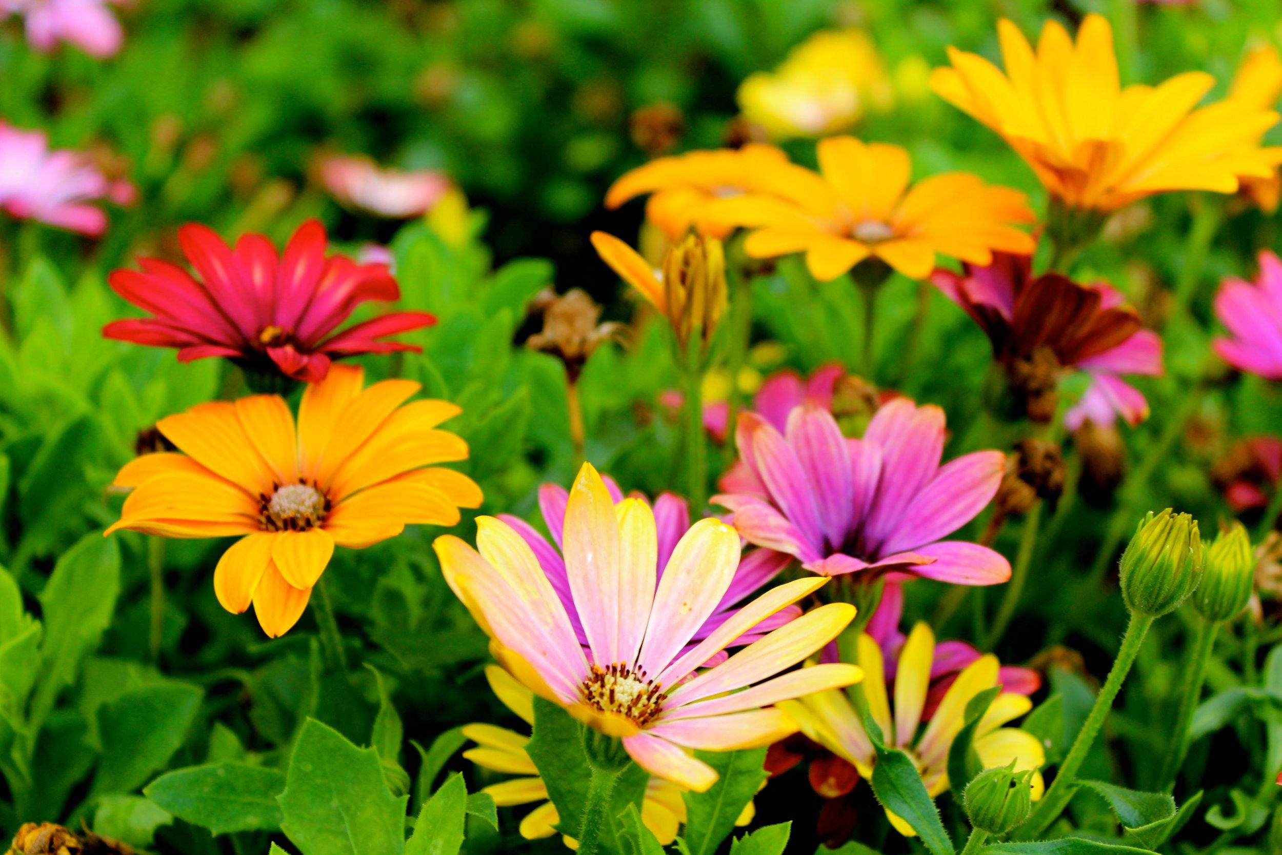 beautiful-blooming-blossom-298246.jpg
