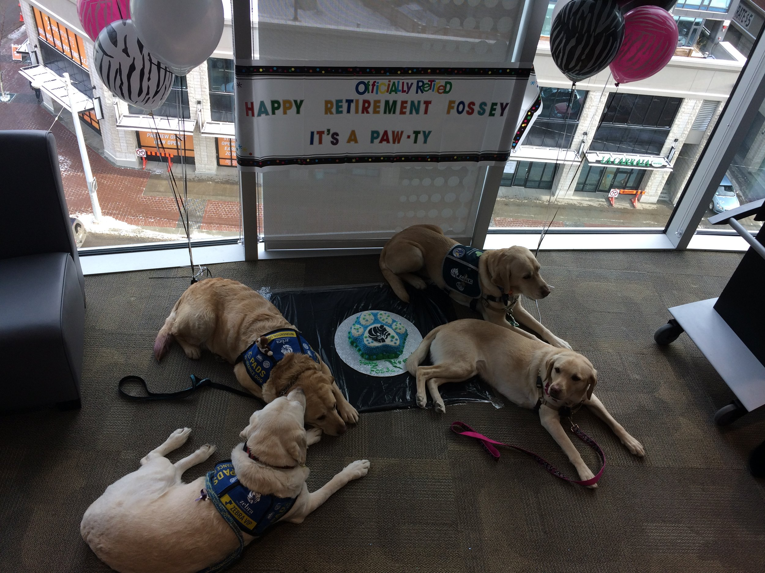dogs and cake.jpg