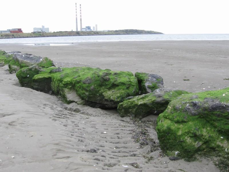 green rocks on the strand.jpg