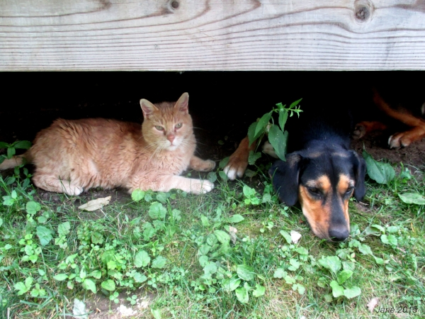 Newman keeping Tete company under the house.
