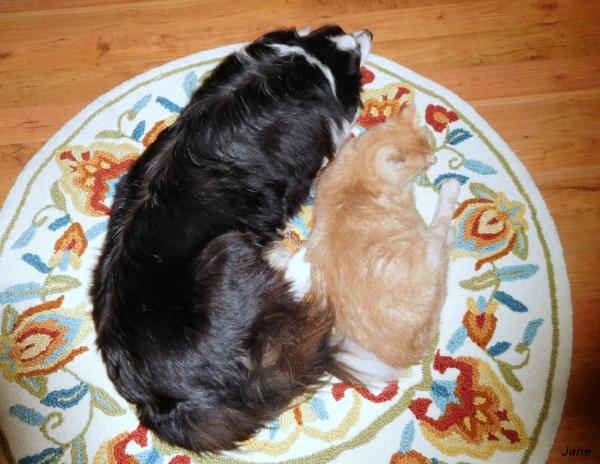 Raime and Newman taking a nap.