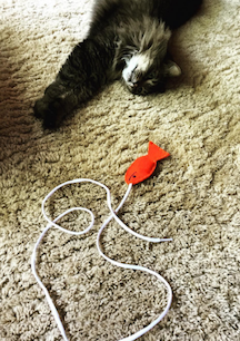 fish cat toy.png
