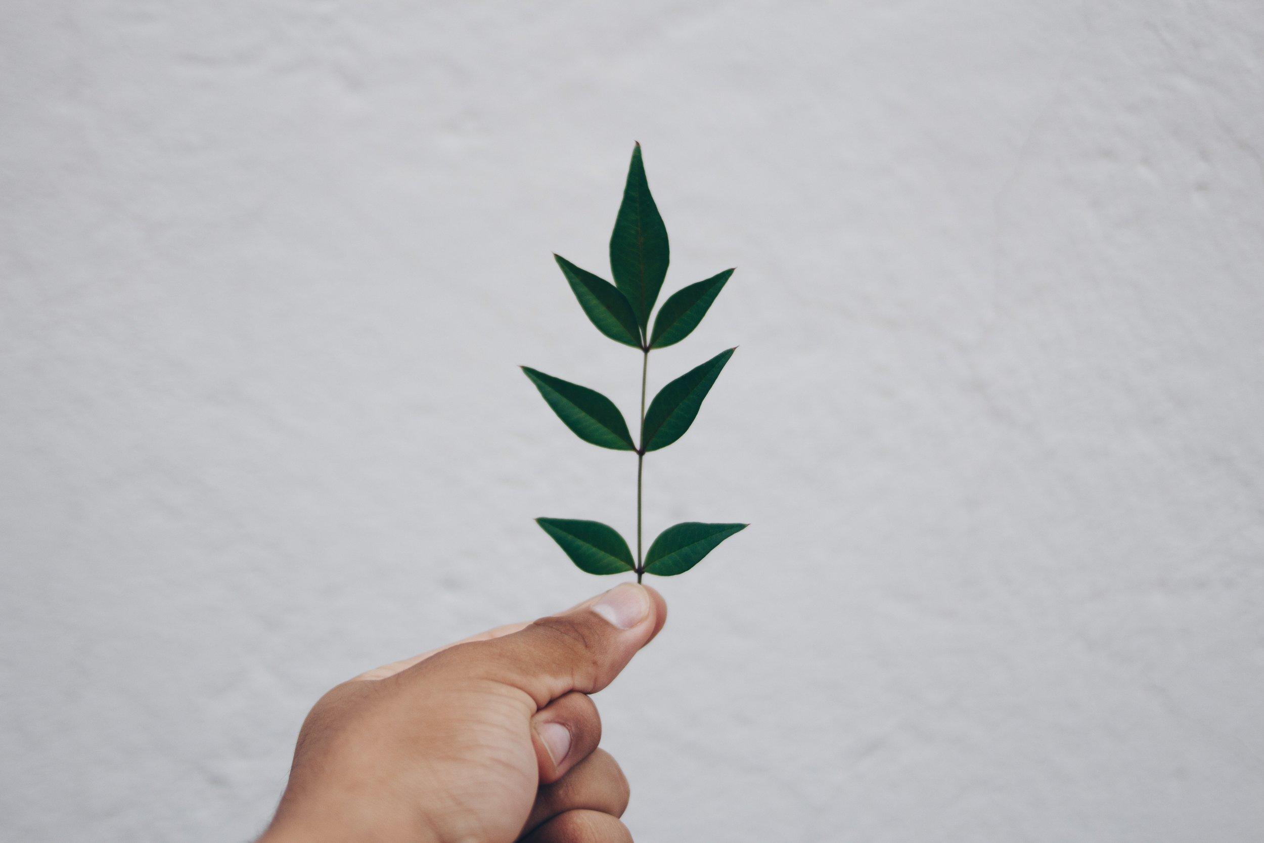 Sustainable Stewardship -