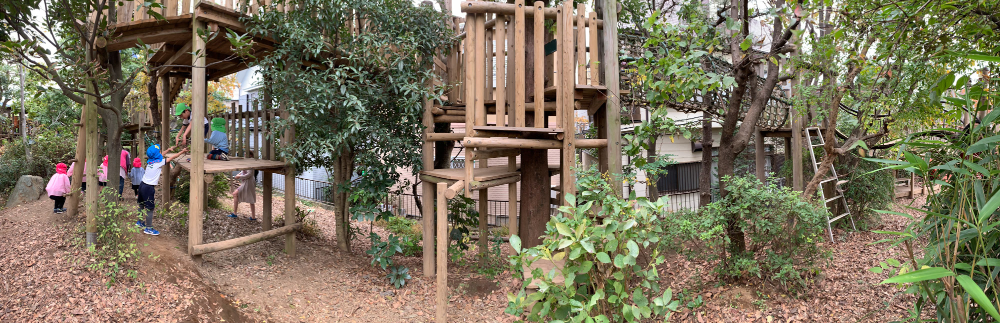 Preschool children at Miyamae Kindergarten explore an area of their school grounds that includes a variety of challenging tree houses and forts built in and among a small forest grove on a hillside.