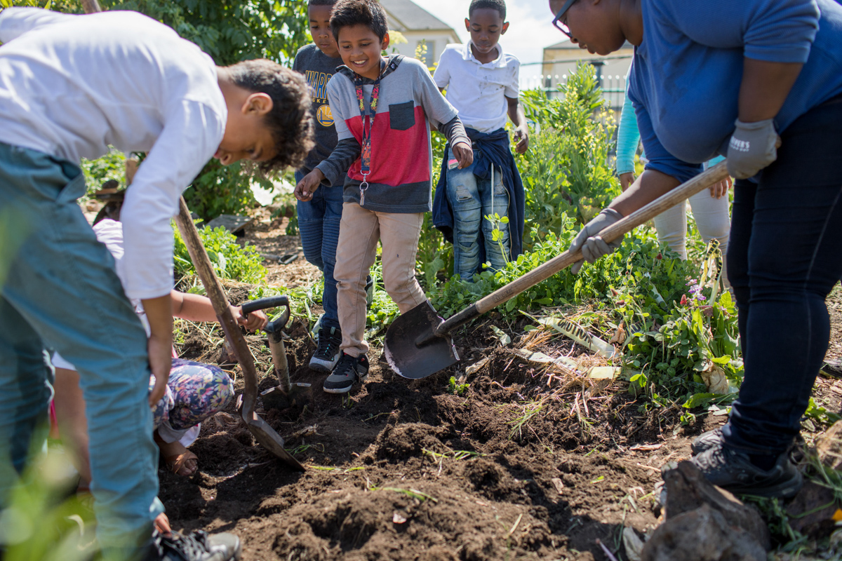 Students working in the garden at Hoover Elementary School. Photo by Paige Green, © Green Schoolyards America