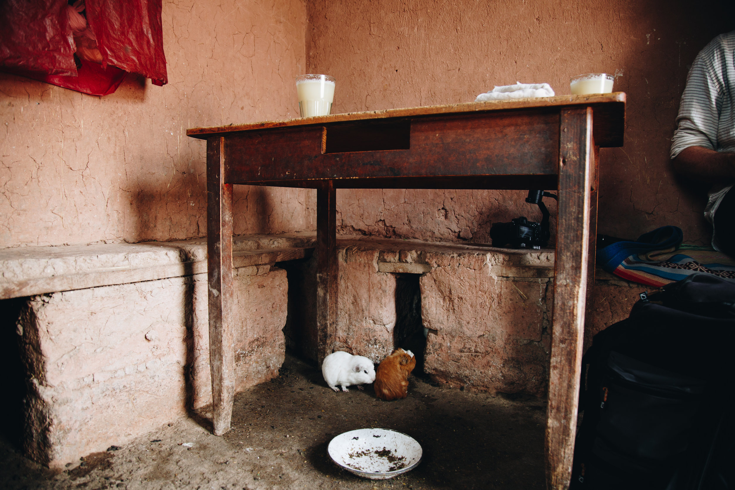 A typical Peruvian kitchen with guinea pigs being raised in a household. They will eventually end up on a plate :(