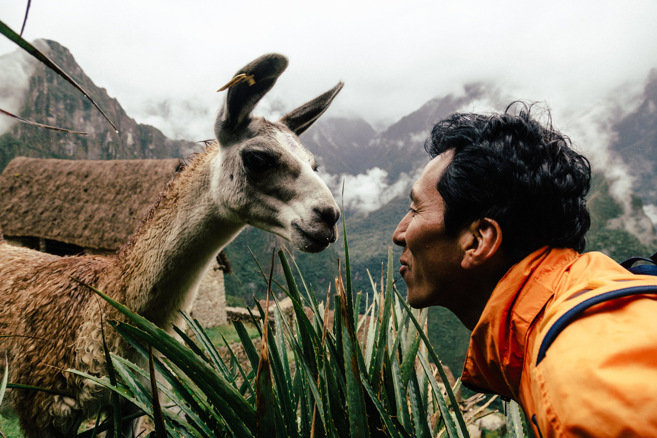 Kissing a Llama in Machu Picchu, Peru