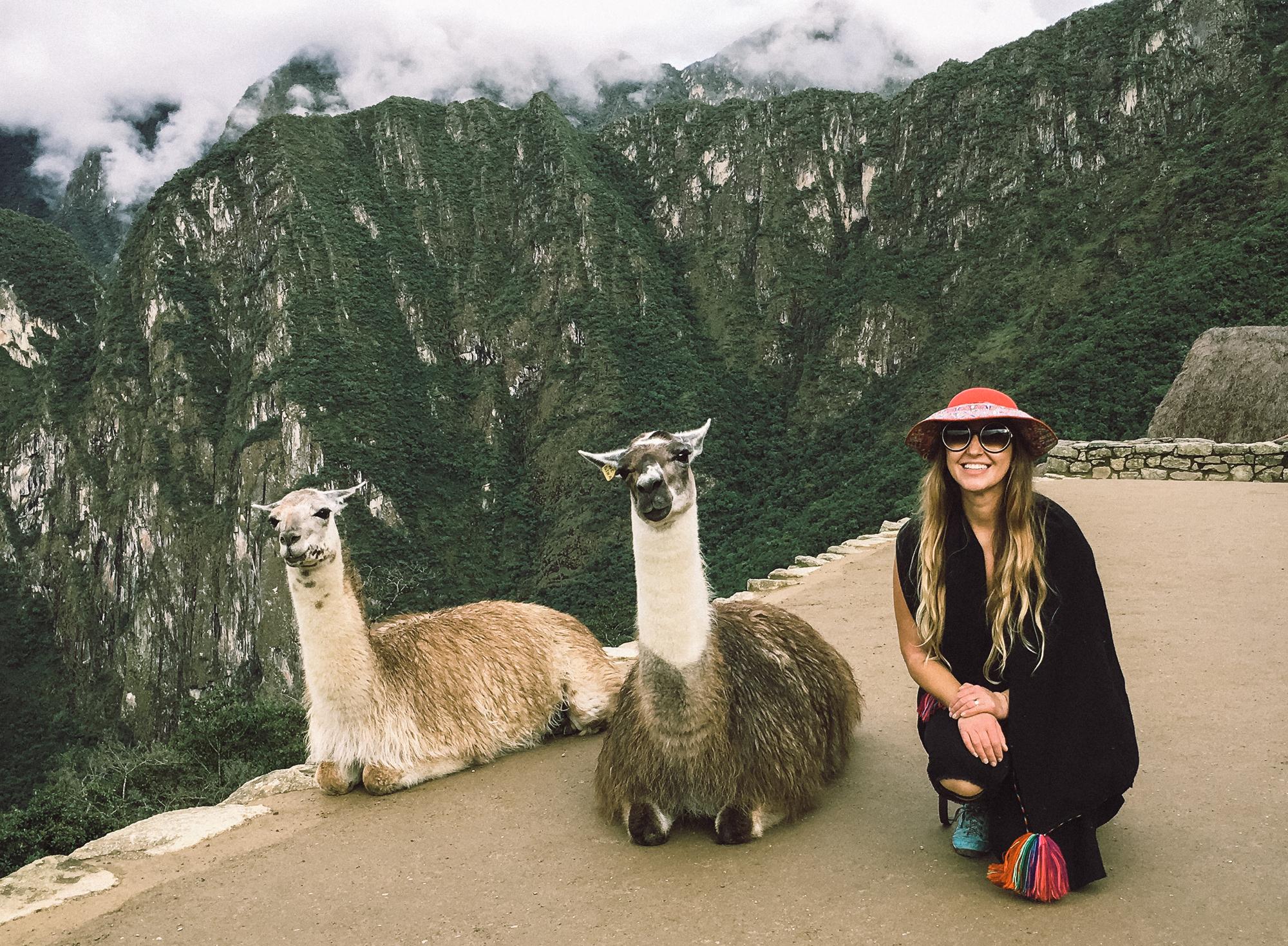 Llamas at Machu Pacchu