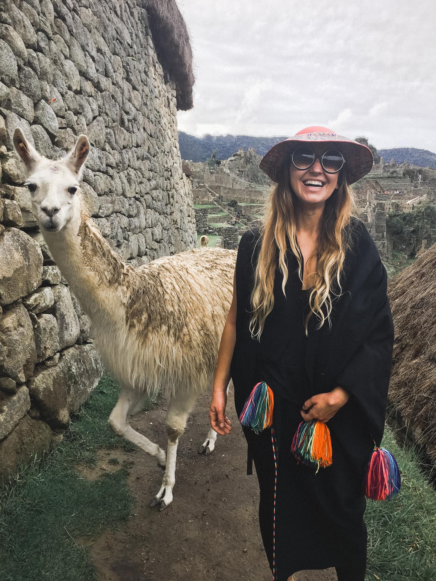 Llamas picture at Machu Picchu