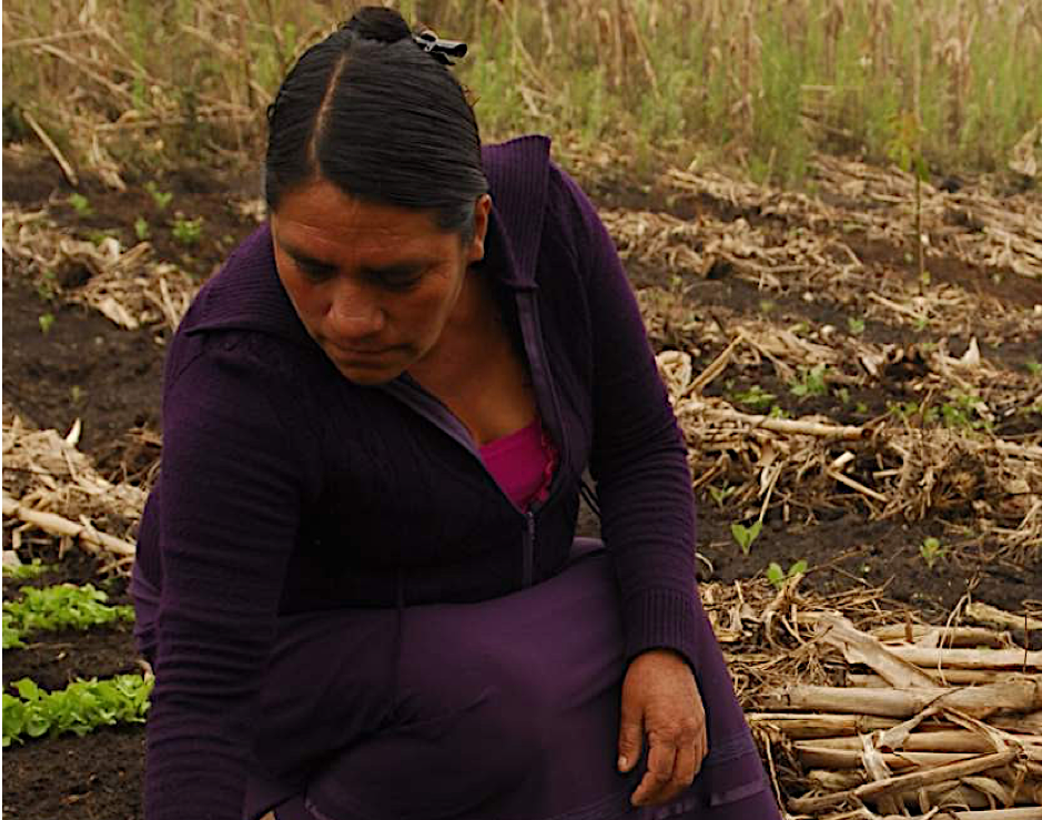 Achievements - Since 2016, we have worked with over 13,000 farmers in 20 Mexican states, each representing a household. 76% of our users share the information received with three other farmers.