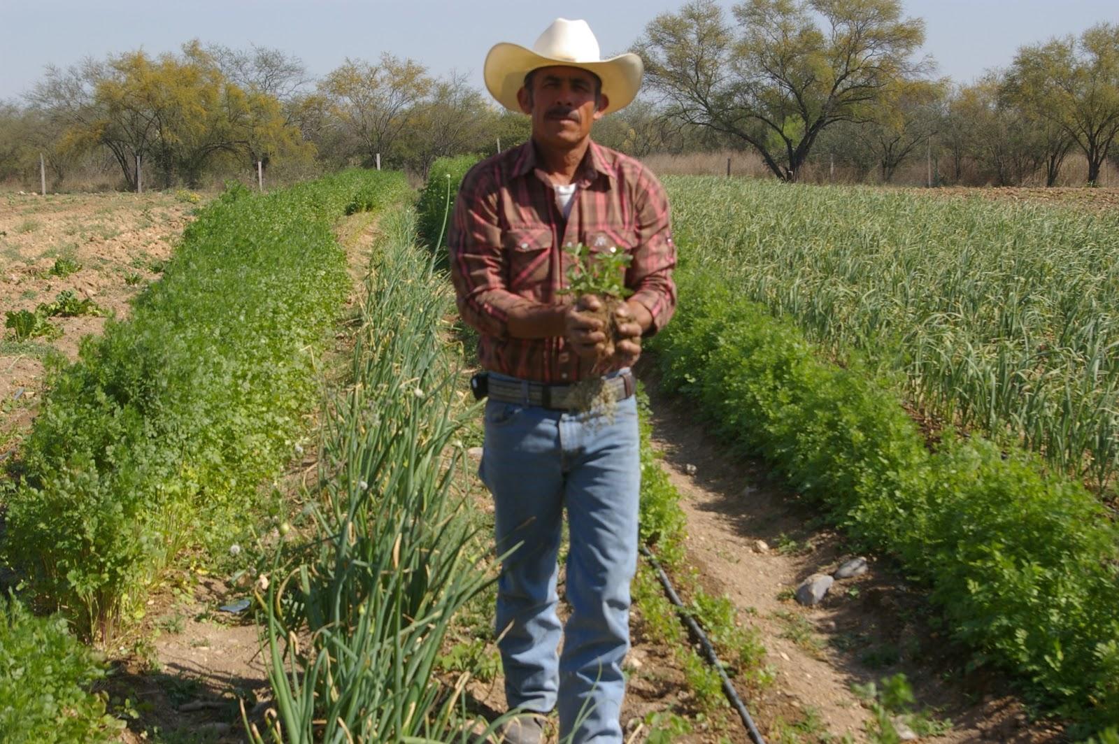 Resultados - Desde el 2015, hemos brindando a 16,500 productores y técnicos en México y Colombia, información accionable para manejar riesgos de clima, plagas y mejorar la calidad de vida de las comunidades rurales . El 75% comparte la información recibida con otros 6 productores.