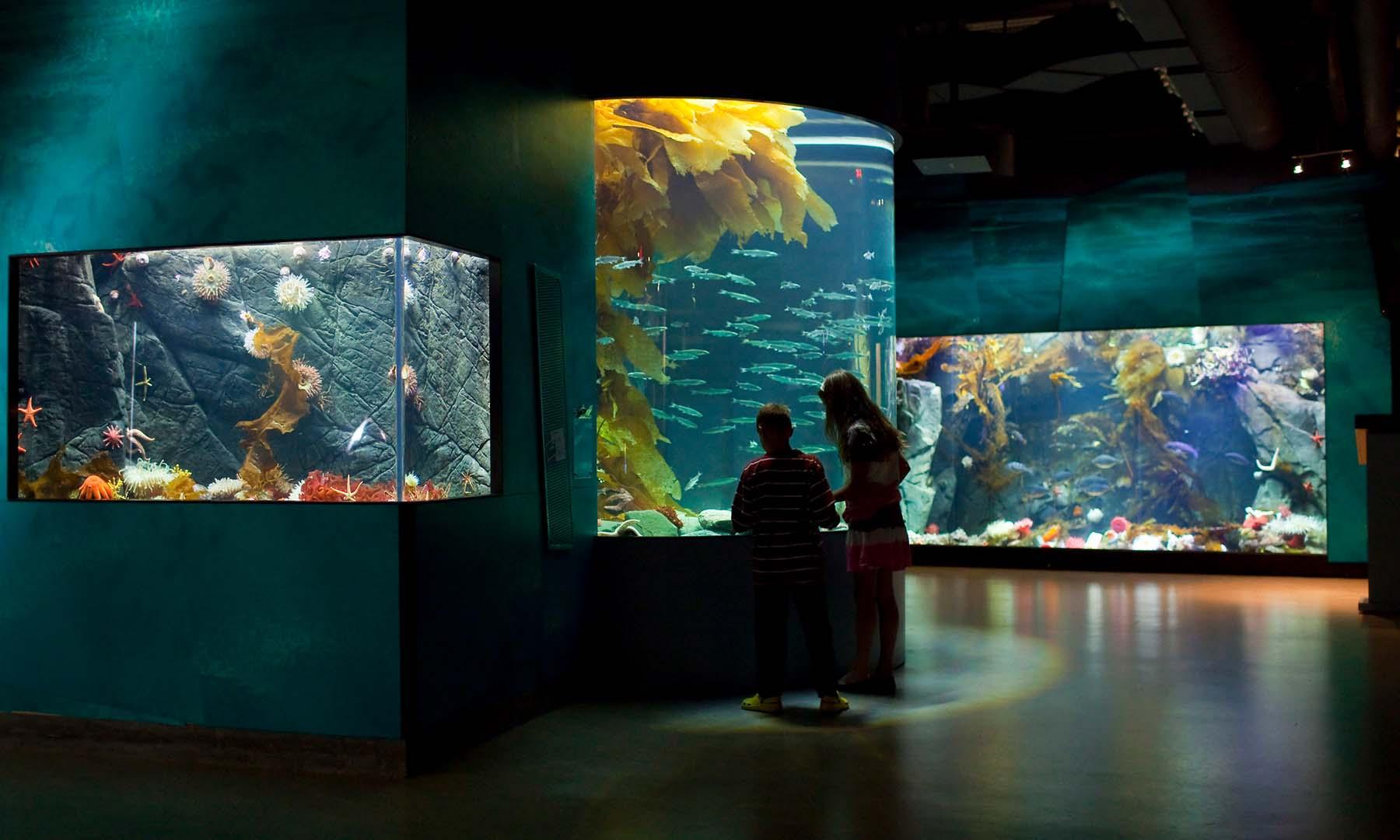 gallery_aquarium_1.jpg