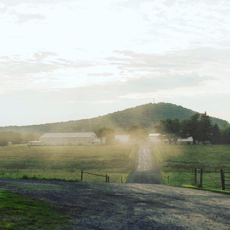 Sunrise-Farms-4P-pigs