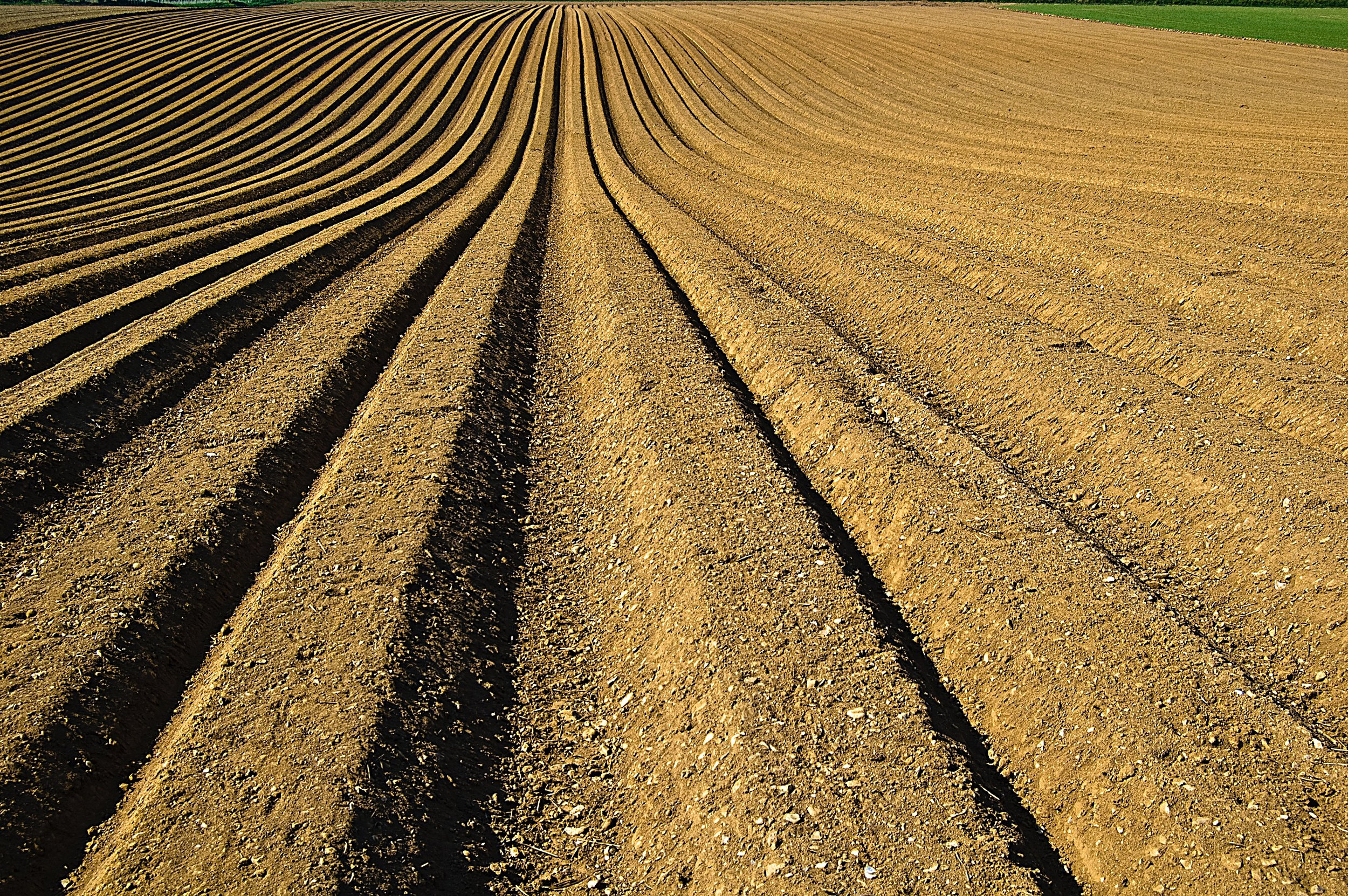 Conventional-Tillage.jpg