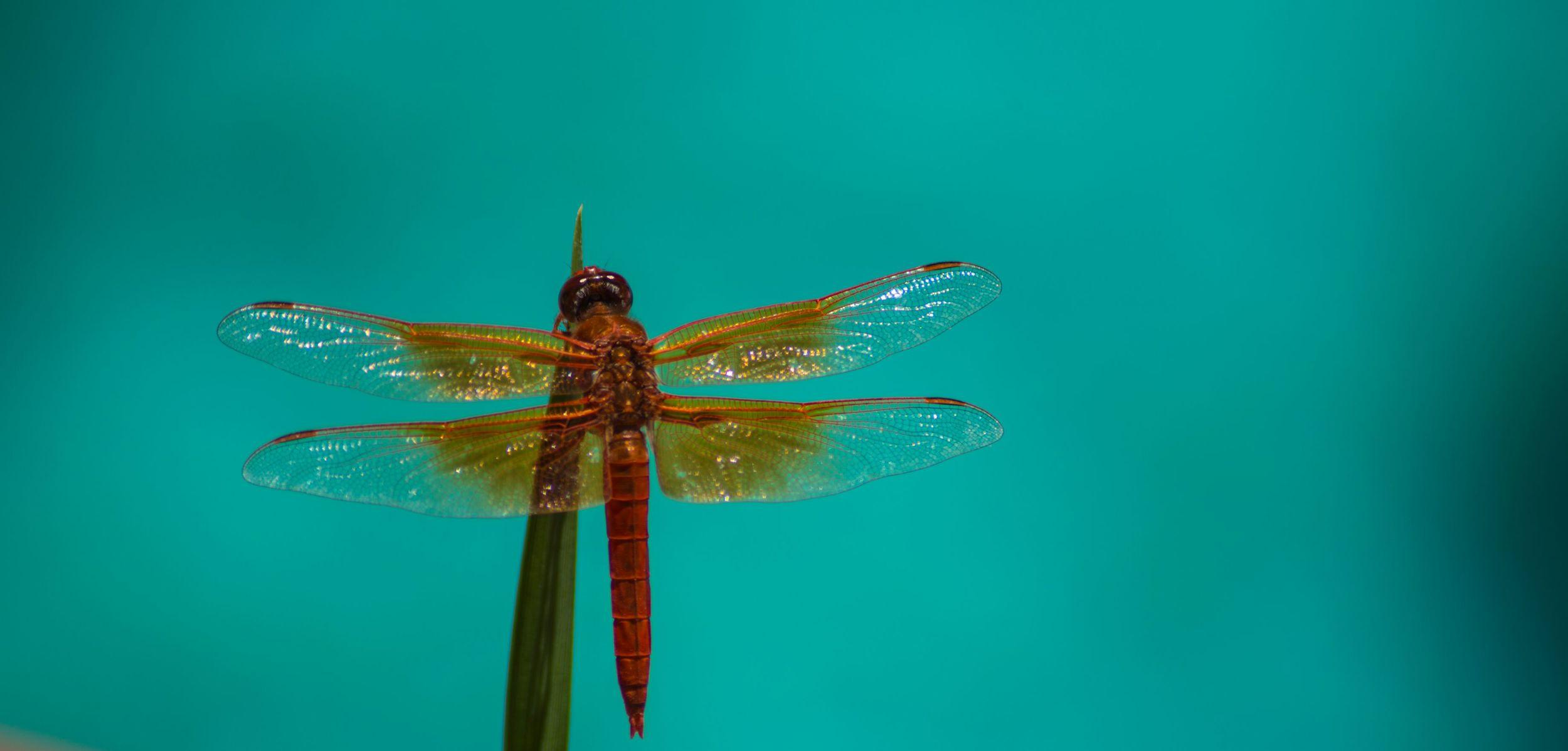 Dragonfly's Back.jpg