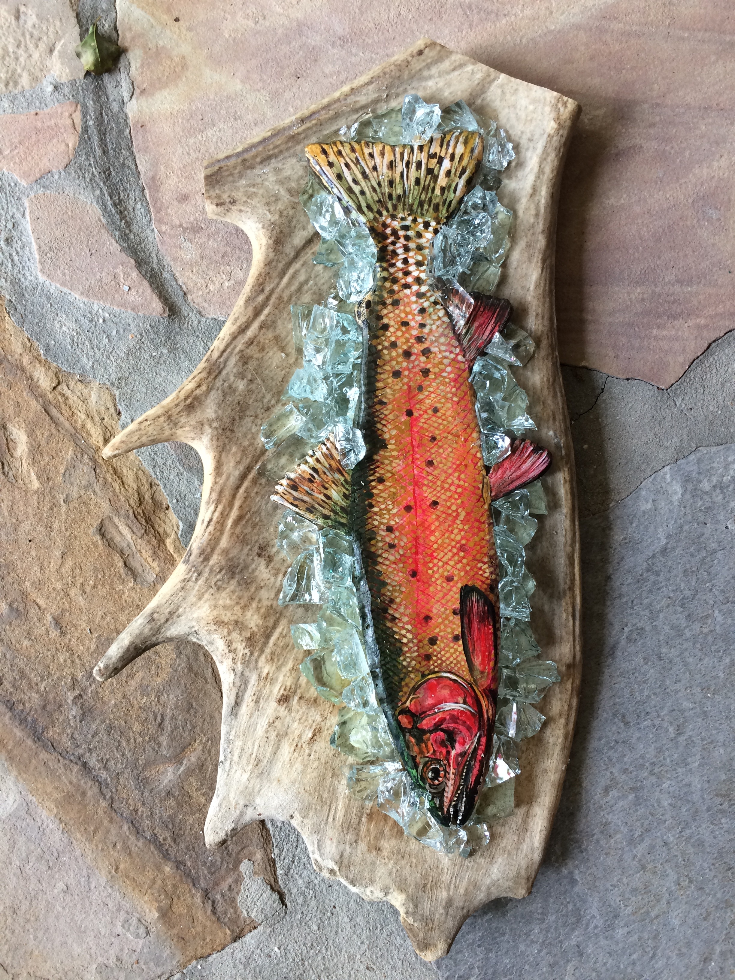 Greenback Cutthroat Trout - SOLD