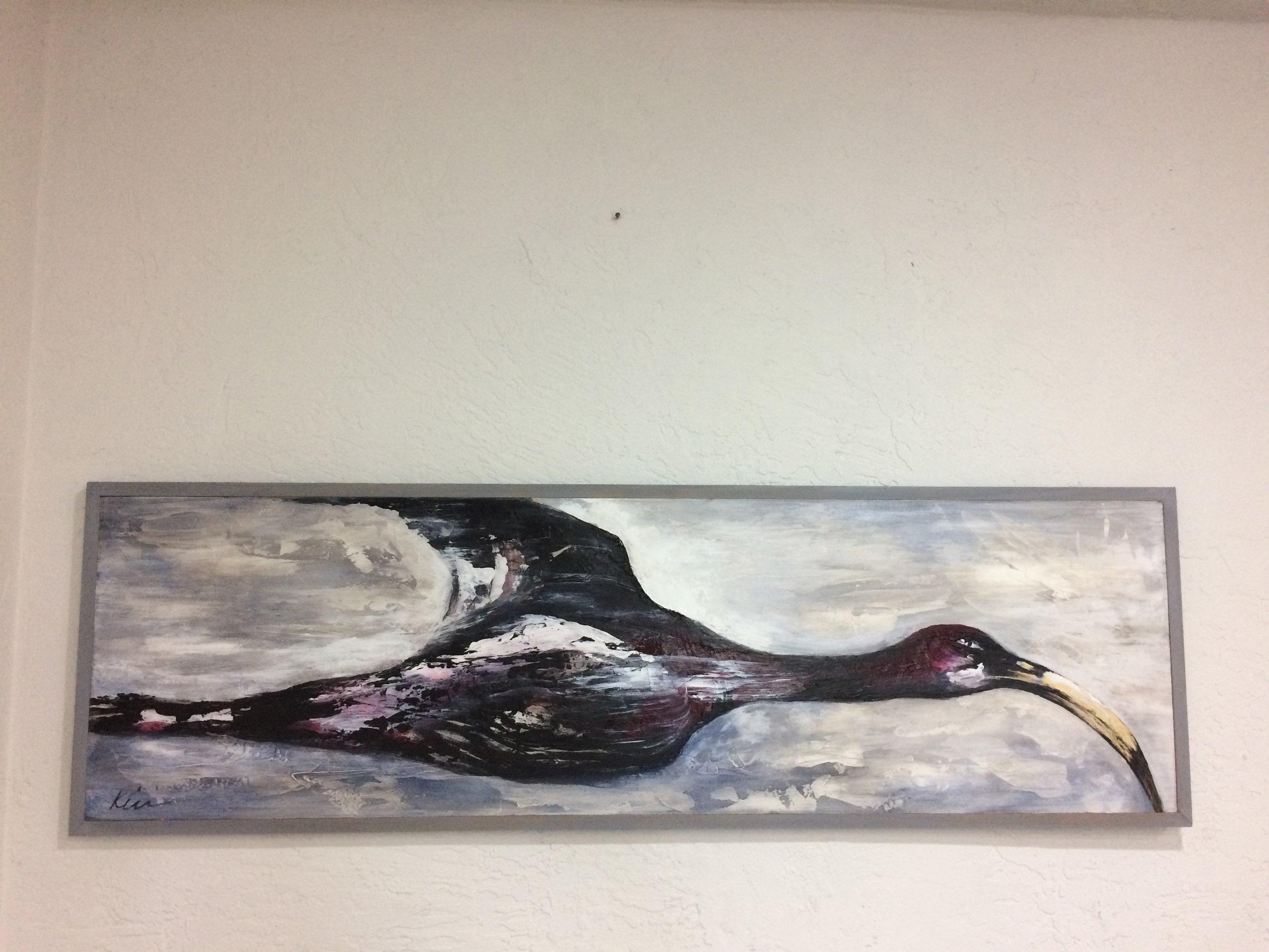 Glossy Black Ibis
