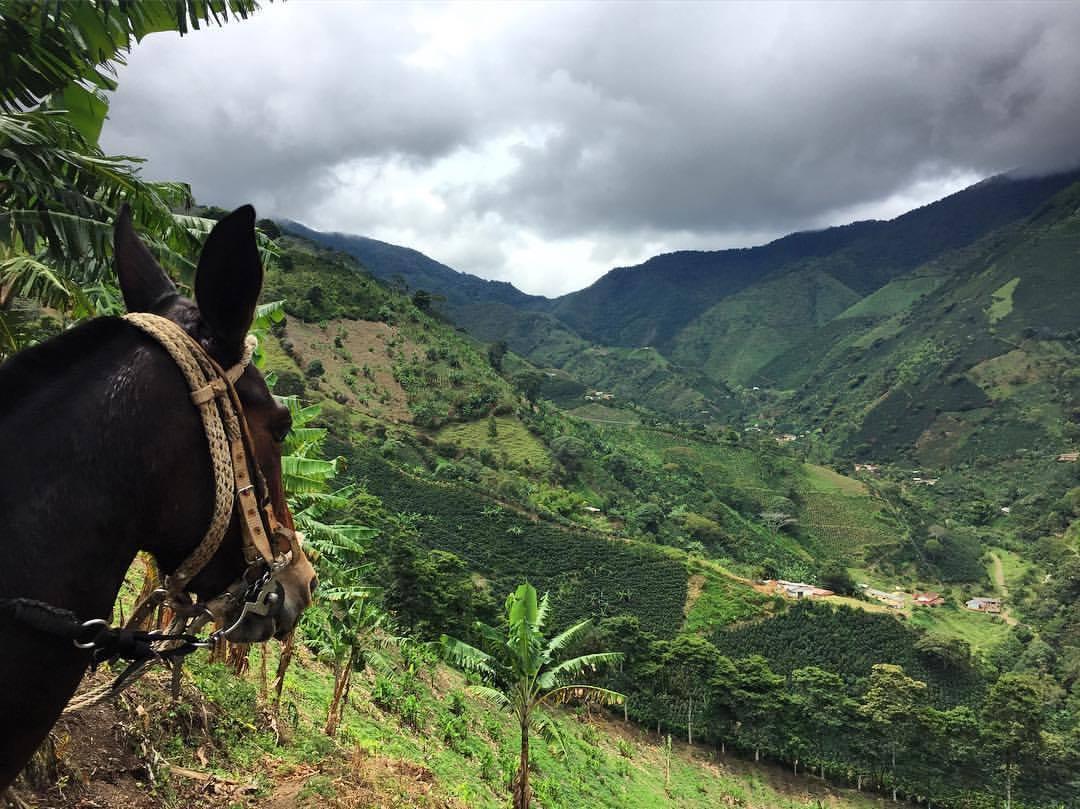 Colombia - La Claudina1.jpg