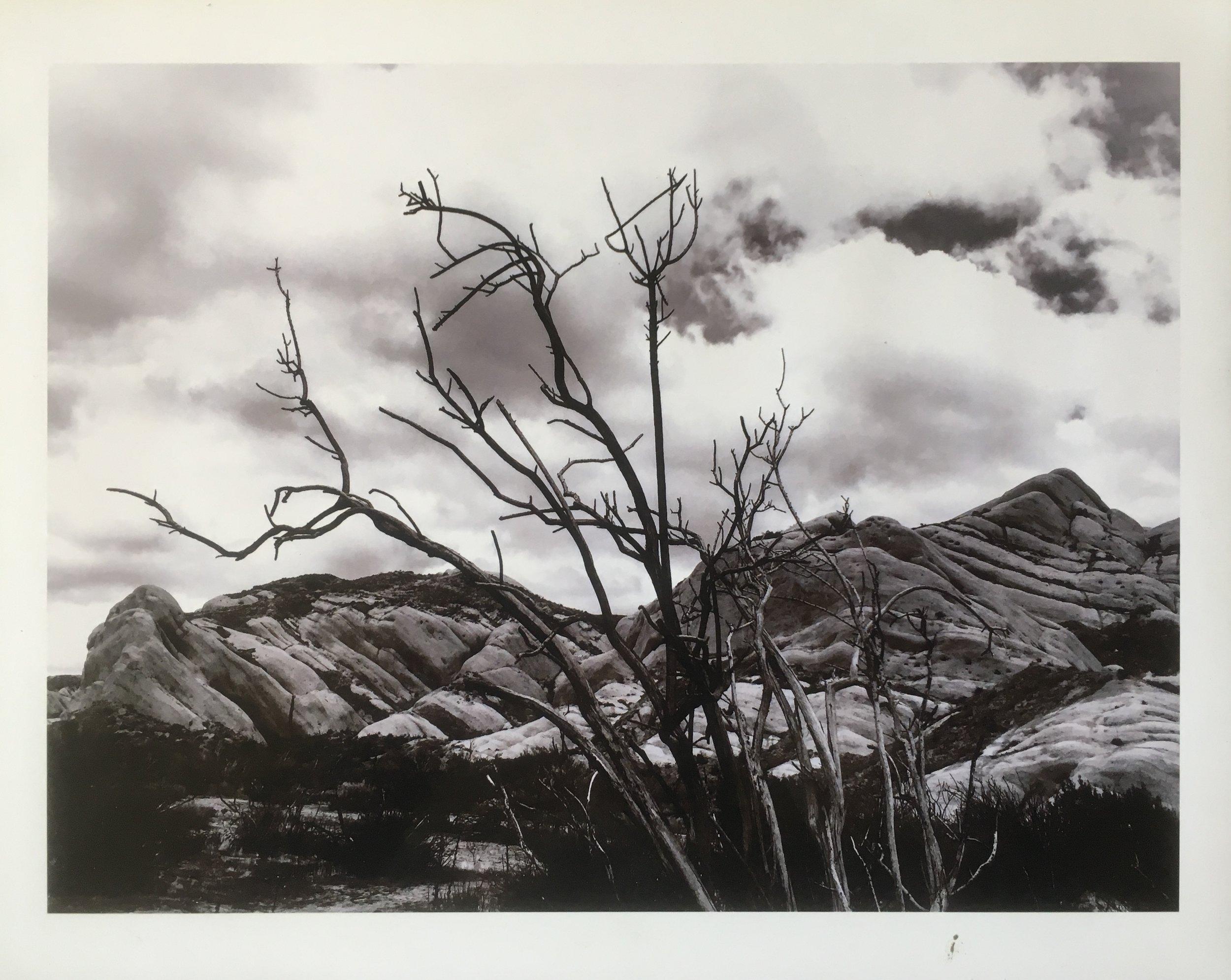 """""""continuous tides (II)"""", by Ingrid M. Calderon-Collins"""