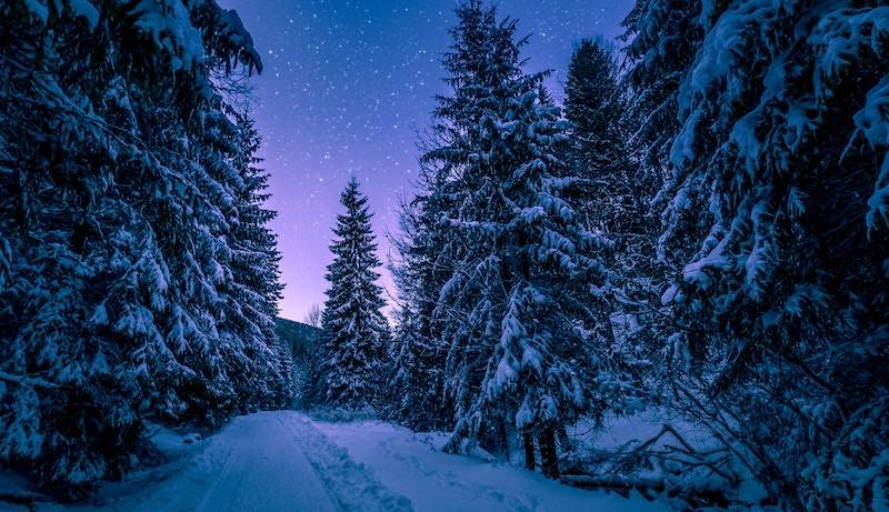 snowshoe-forest.jpg