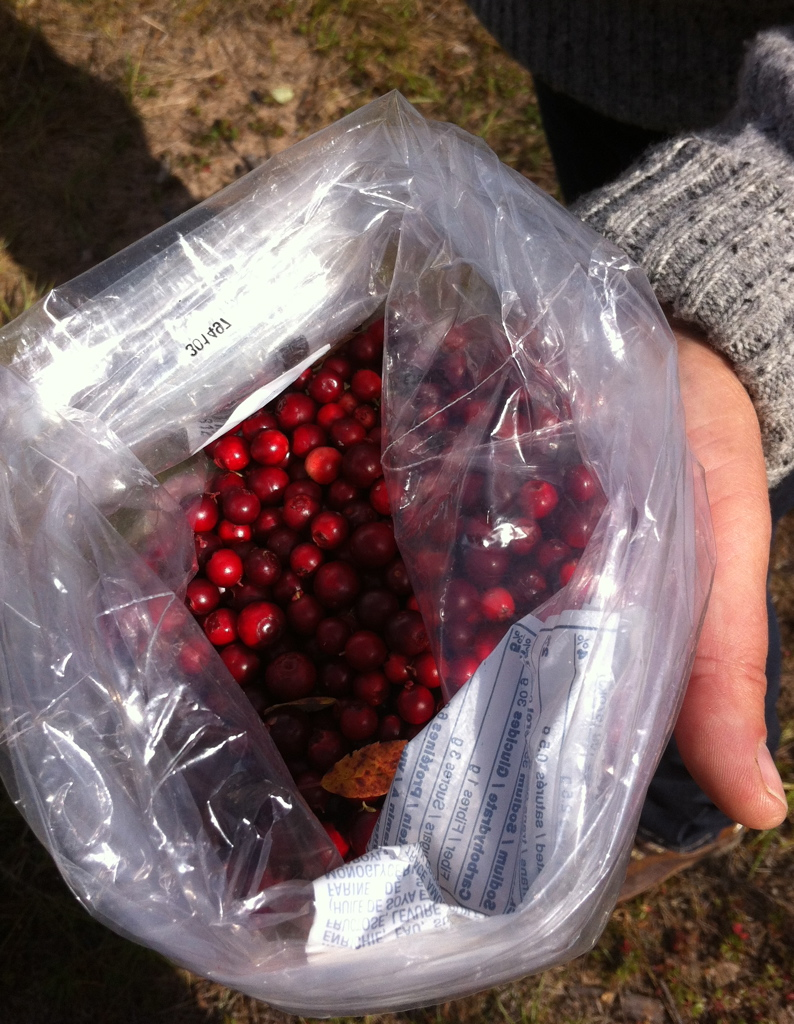 Cranberries picked near Cranberry Lake, AB