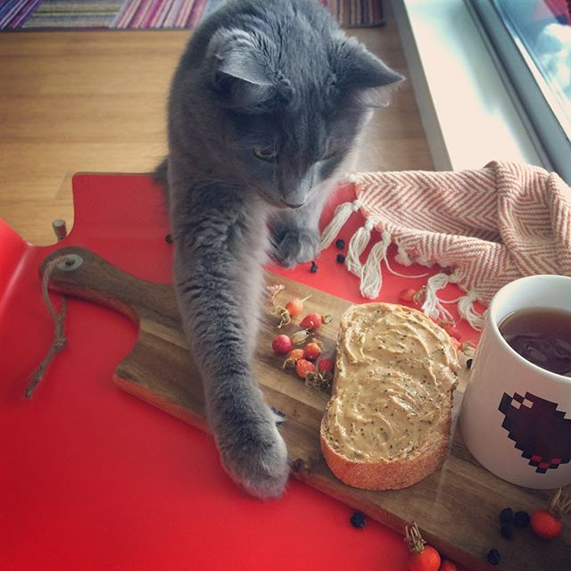 Look who's craving our chia peanut butter on toast! . . . . . . #chiaseeds #peanutbutter #peanutbutterjellytime #madeincanada #pbj #fall #fallmorning #healthyfood #healthyhabits #vegan #veganeats #veganlife #cleaneating #cats #catsofinstagram #catmonday