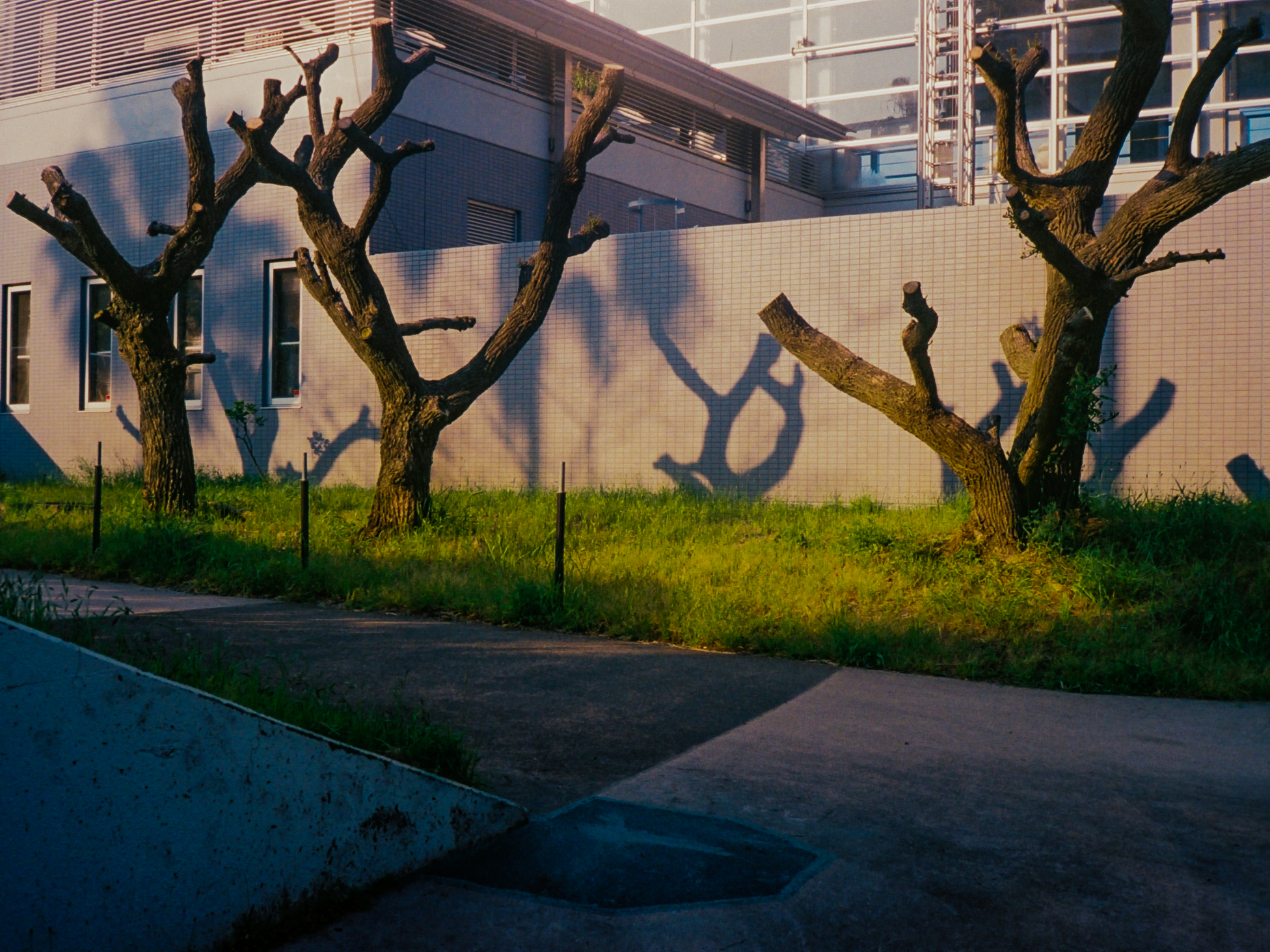 TreeShadowsJapan1.jpg