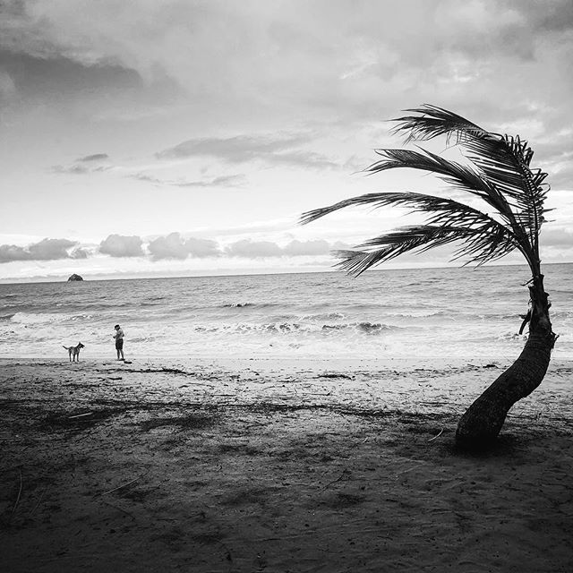 Palm Cove FNQ #fnq #tropical #paradise #blackandwhite #instagood #holiday #rnr #beach #cyclone