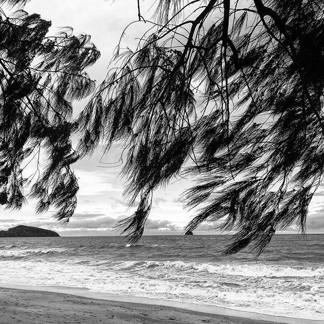 Palm Cove FNQ #fnq #tropical #paradise #blackandwhite #instagood #holiday #rnr #beach