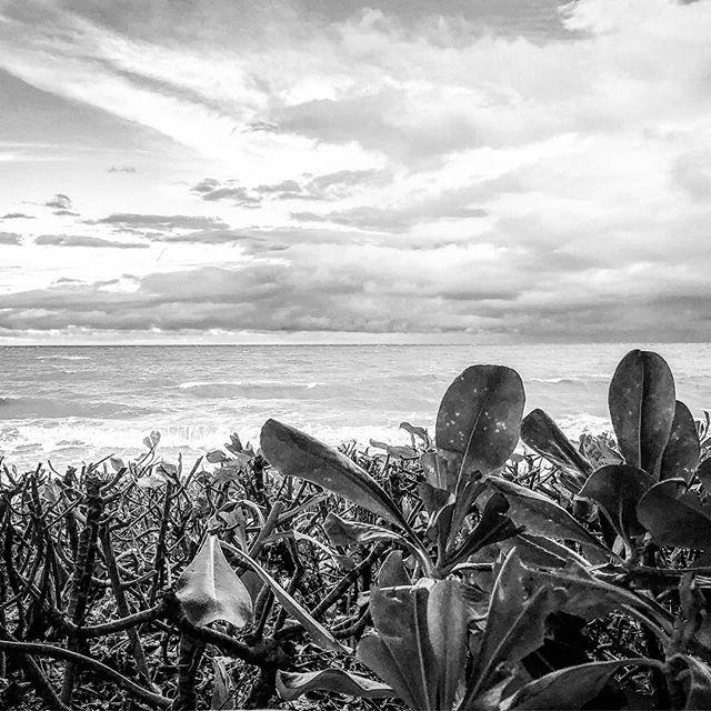 Palm Cove FNQ #fnq #tropical #paradise #blackandwhite #instagood #holiday #rnr #beach #mangrove