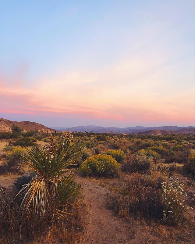 Joshua Tree 🥾 part 3 #joshuatree #nationalpark #yucca #chollacactus #pricklypear #sunset #hike #optoutside #nature #california #jumborocks #vsco #VSCOcam