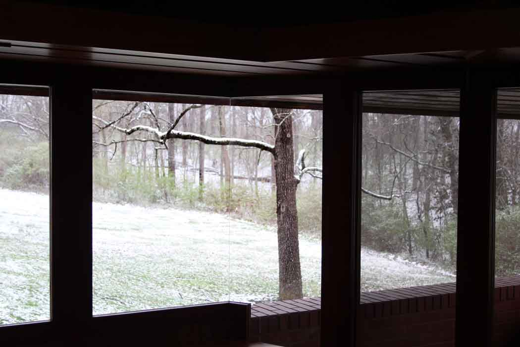 A view of the acres of woods from the study window