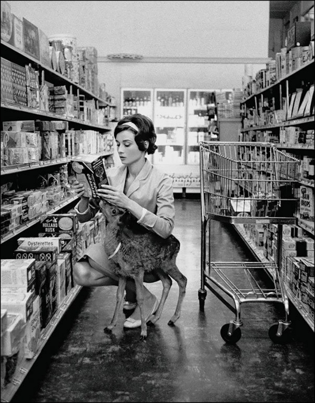 ©1978 Bob Willoughby/mptvimages.com - Audrey Hepburn shopping with her pet fawn, Beverly Hills, 1958.